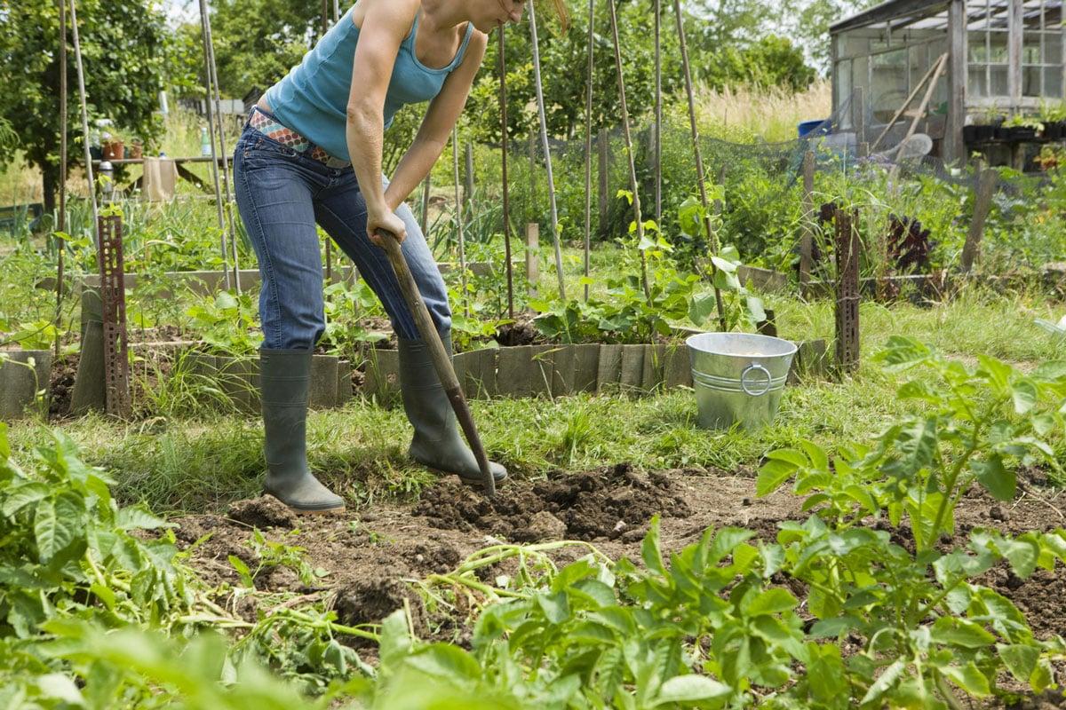 comment faire un jardin pour les débutants en 5 étapes
